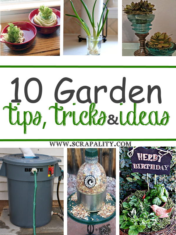 10 Garden Tips Tricks Ideas