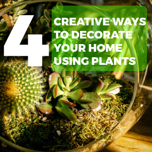 4 Creative Ways to Decorate Your Home using Plants Featured