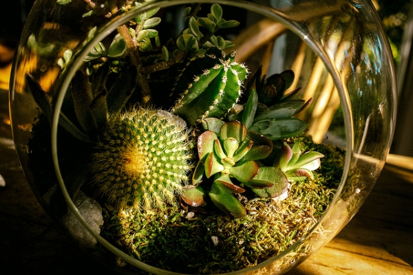 4 Creative Ways to Decorate Your Home using Plants