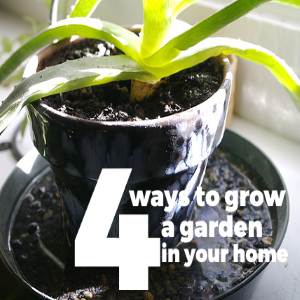4 Ways to Grow a Garden In Your Home