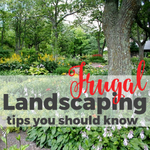 Frugal Landscaping Tips You Should Know
