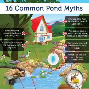 16 Common Pond Myths