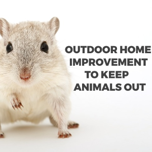 Outdoor Home Improvements to Keep Animals out
