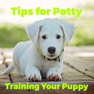 Incredible and Fast Tips for Potty Training Your Puppy