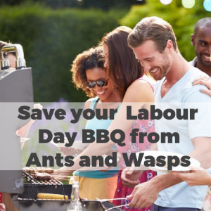 Save Your Labour Day BBQ From Ants and Wasps