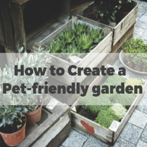 How to Create a Pet-Friendly Garden
