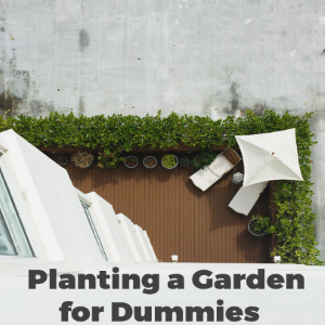 Planting a Flower Garden for Dummies : 6 Things You Need to Know
