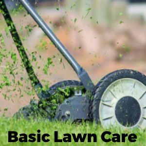 Basic Lawn Care and Maintenance Tips