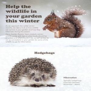 Assist Wildlife this Winter by Encouraging them into Your Garden