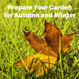 Prepare Your Garden for Autumn and Winter Delights