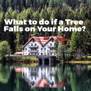 What to do if a Tree Falls on Your Home?