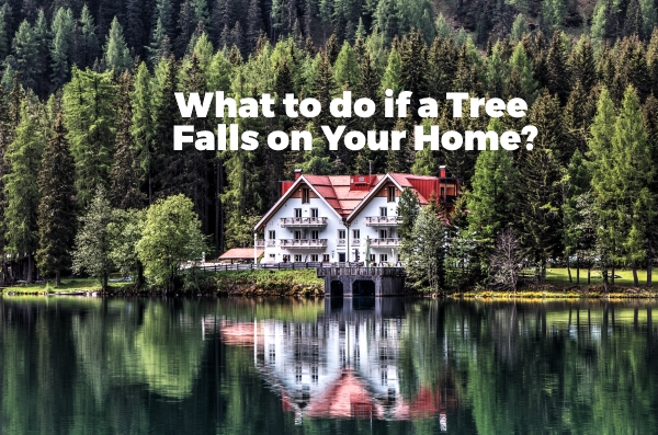 What to do if a Tree Falls on Your Home