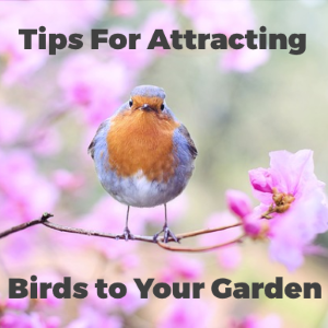 Tips for Attracting Birds to Your Garden