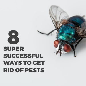 8 Super Successful Ways to Get Rid of Pests