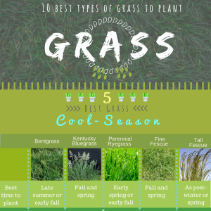 10 Popular Types of Grasses to Plant in All Season