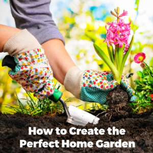 How to Create the Perfect Home Garden