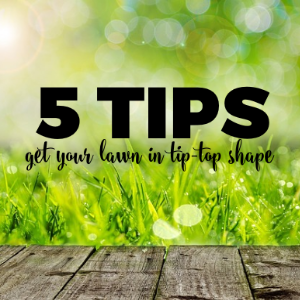 5 Tips for Getting Your Lawn in Tip-Top Shape