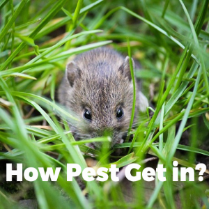 Top 3 Ways Pests Get into Your Home and How to Get Rid of Them