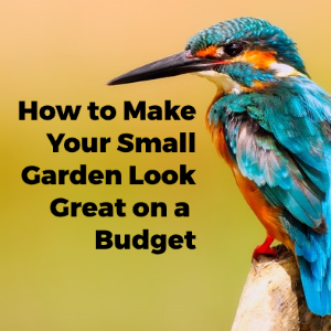 How to Make Your Small Garden Look Great on a Budget