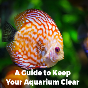 A Guide to Keep Your Aquarium Crystal Clear