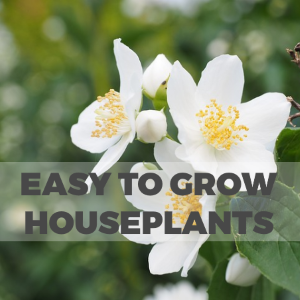 Easy To Grow Houseplants for People Without a Green Thumb