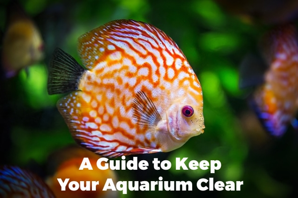 A Guide to Keep Your Aquarium Clear