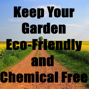 How to Keep Your Garden Eco-friendly and Chemical-free