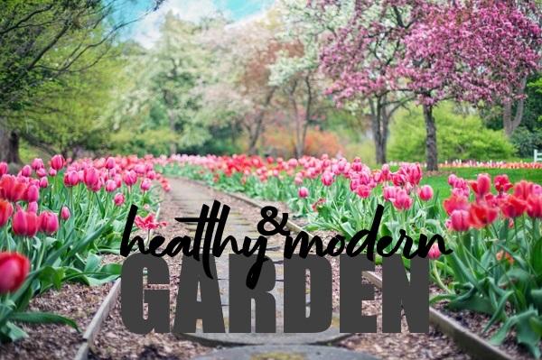 Healthy and Modern Garden