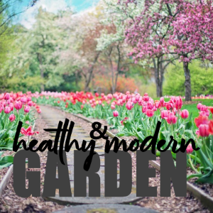5 Useful Tips to Grow a Healthy and Modern Garden