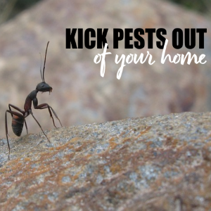 How to Kick Pests Out Of Your Home: The Safe Way