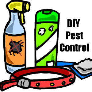 DIY Pest Control Techniques for Your Home