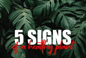 5 Signs of a Healthy Plant