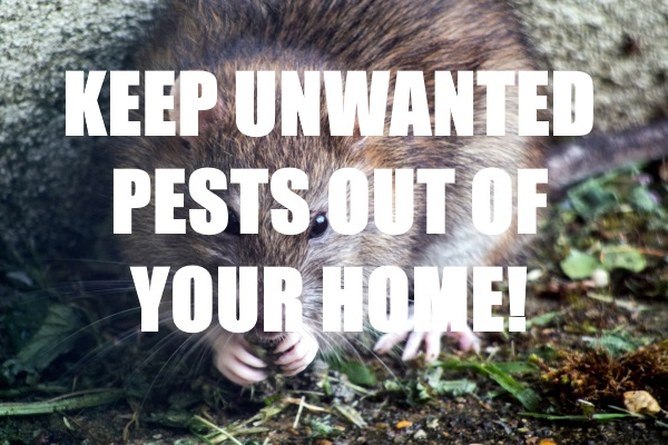 Unwanted Animal Guests Out Of Your Home