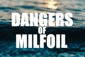 Dangers of Milfoil