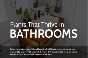 Best Plants With Which To Decorate Your Bathroom
