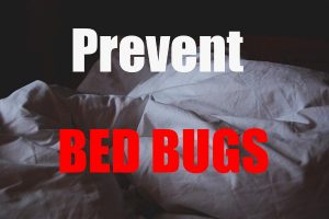 Prevent Bed bugs