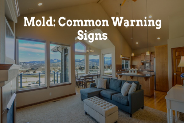 Mold: Common Warning Signs