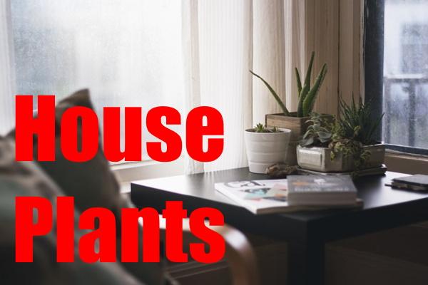 Incorporating Plants