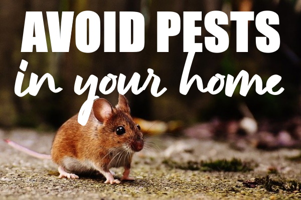 Avoid Pests in Your Home