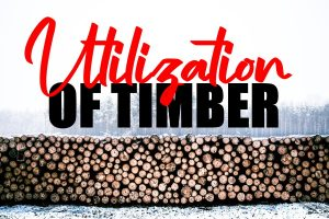 Timber to Generate Solid Trending Products
