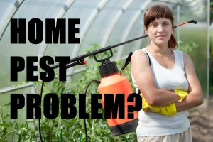 Pest Problem in Your Home