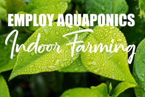 Why Should You Employ Aquaponics In Indoor Farming?