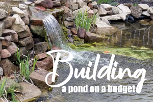 Where Can I Cut Costs When Building a Pond on a Budget