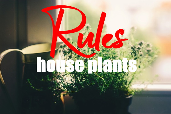 Rules for Artificial Plants