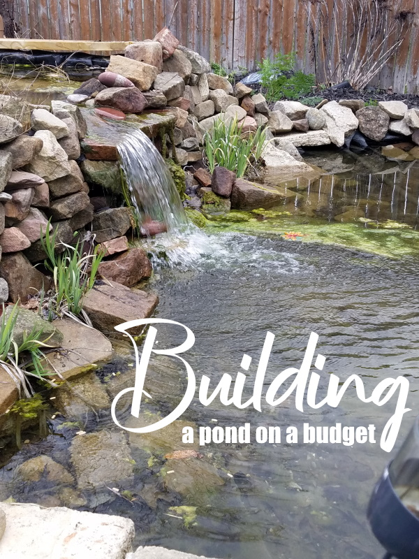 Building Pond on a Budget
