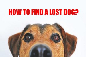 Find a Lost Dog