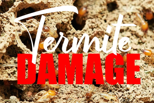 Damage is Caused By Termites