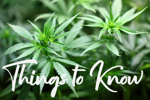 Want to Grow Marijuana