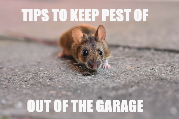 Keep Pests Out of Your Garage