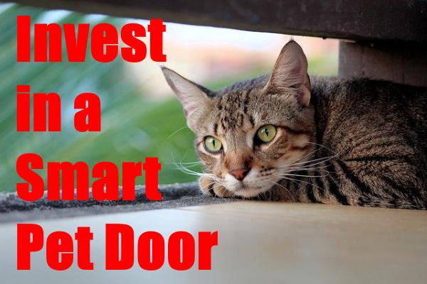 Invest In A Smart Pet Door